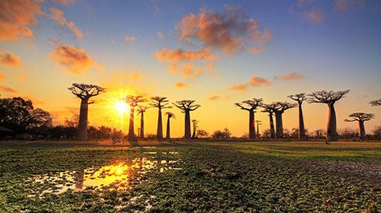 Rexel in Madagascar